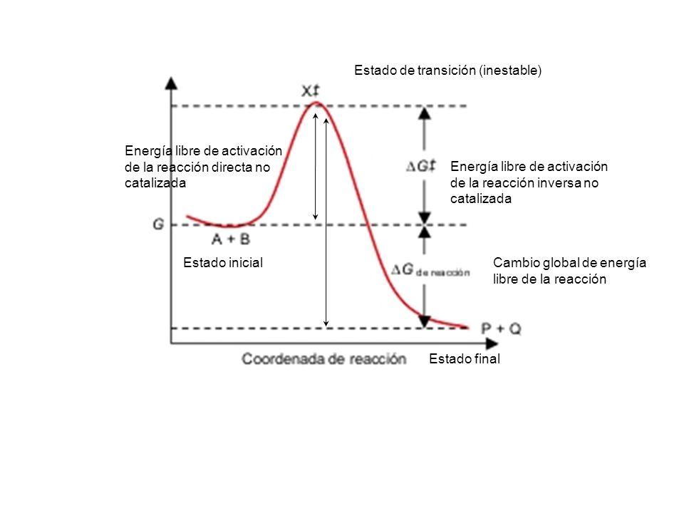 Estado de transición (inestable) Energía libre de activación de la reacción directa no catalizada Estado inicial Estado final Energía libre de activac