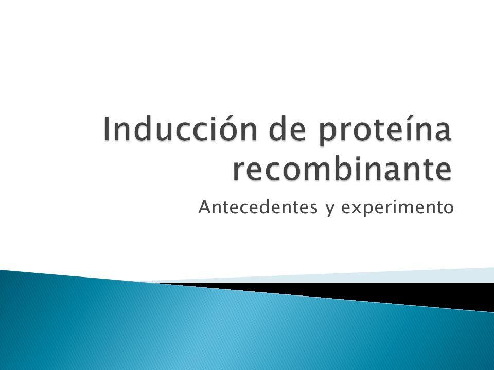 Conocer el fundamento de la inducción de la síntesis de proteínas recombinantes en E.