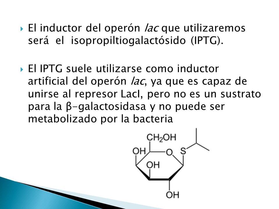 El inductor del operón lac que utilizaremos será el isopropiltiogalactósido (IPTG). El IPTG suele utilizarse como inductor artificial del operón lac,