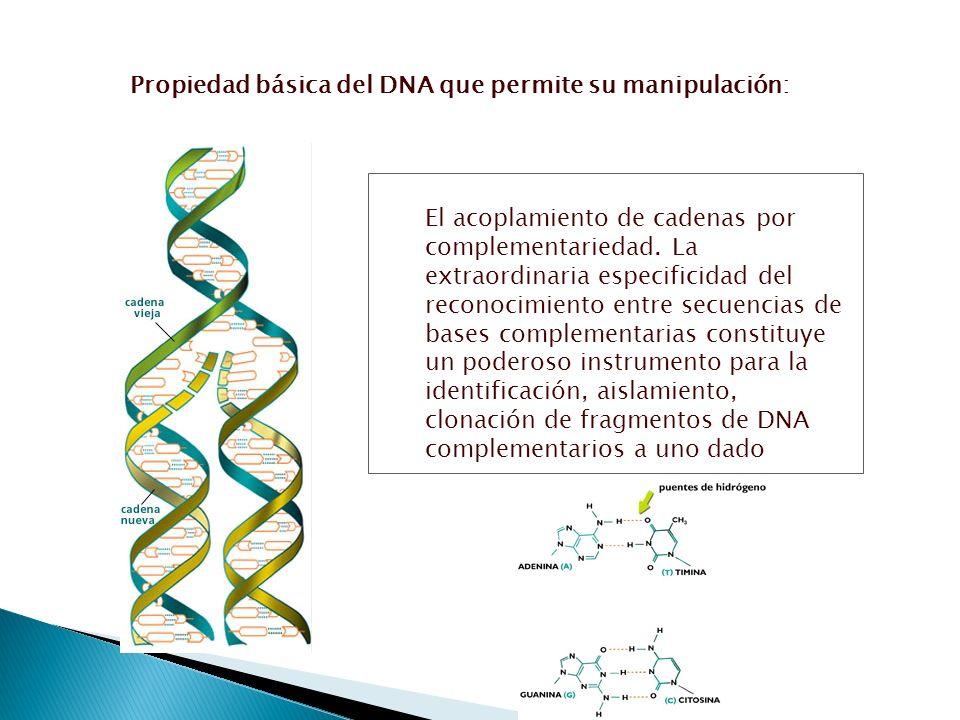 El acoplamiento de cadenas por complementariedad. La extraordinaria especificidad del reconocimiento entre secuencias de bases complementarias constit