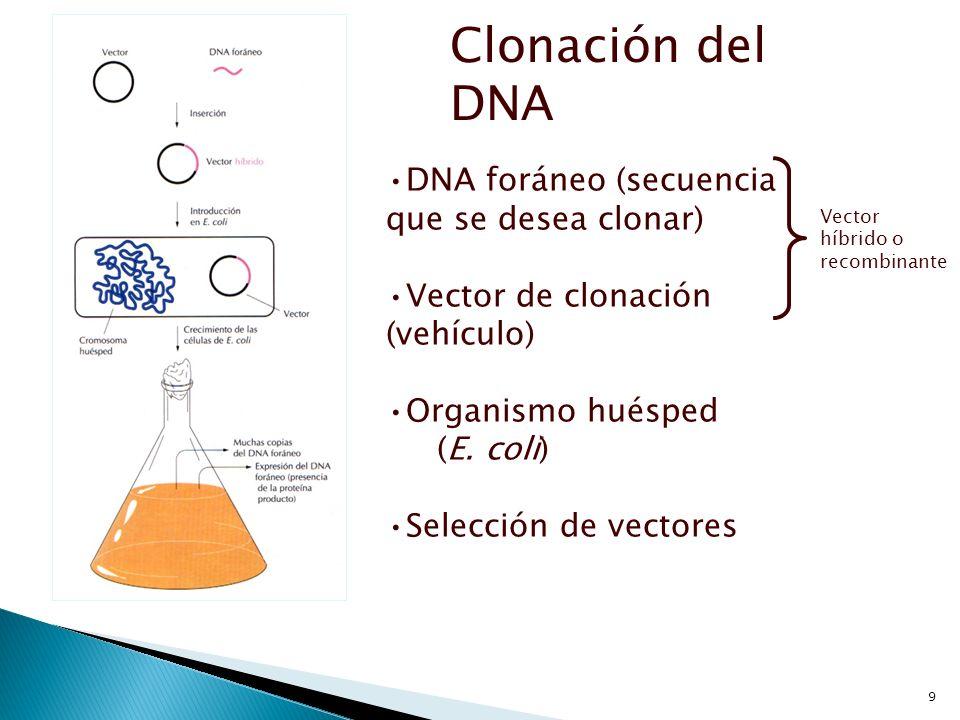 9 Clonación del DNA DNA foráneo (secuencia que se desea clonar) Vector de clonación (vehículo) Organismo huésped (E. coli) Selección de vectores Vecto