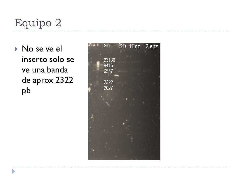 Equipo 2 No se ve el inserto solo se ve una banda de aprox 2322 pb Std 23130 9416 6557 2322 2027 SD 1Enz 2 enz