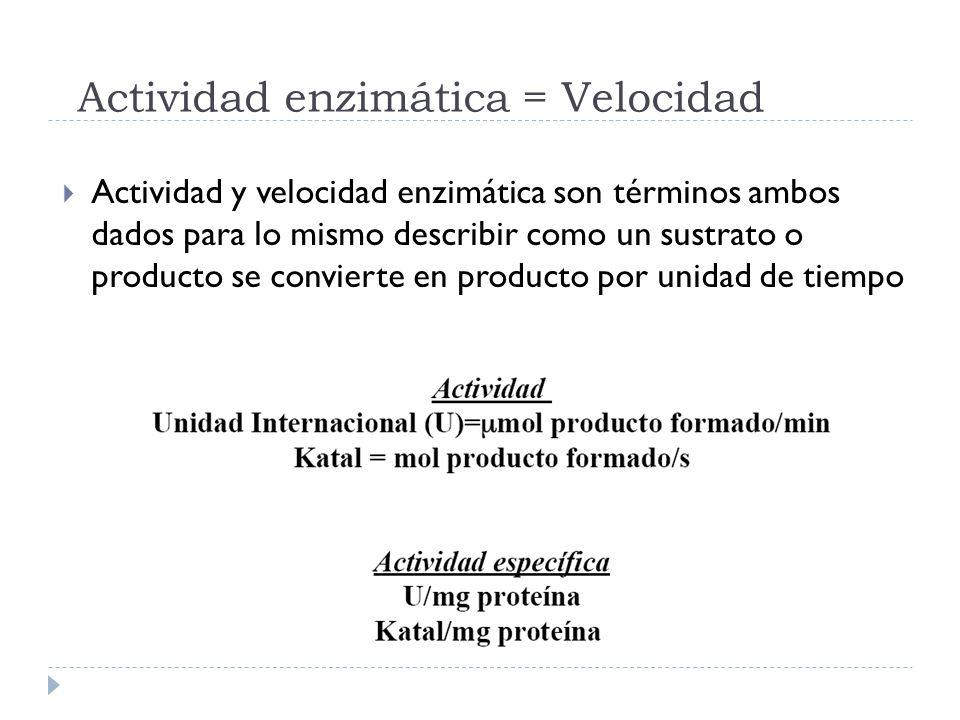 Actividad enzimática = Velocidad Actividad y velocidad enzimática son términos ambos dados para lo mismo describir como un sustrato o producto se conv