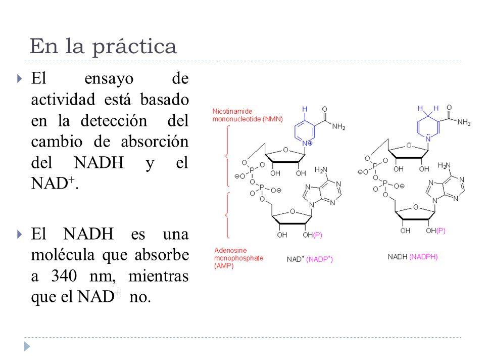 En la práctica El ensayo de actividad está basado en la detección del cambio de absorción del NADH y el NAD +. El NADH es una molécula que absorbe a 3