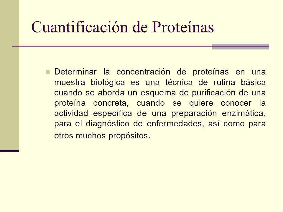 Cuantificación de Proteínas Determinar la concentración de proteínas en una muestra biológica es una técnica de rutina básica cuando se aborda un esquema de purificación de una proteína concreta, cuando se quiere conocer la actividad específica de una preparación enzimática, para el diagnóstico de enfermedades, así como para otros muchos propósitos.