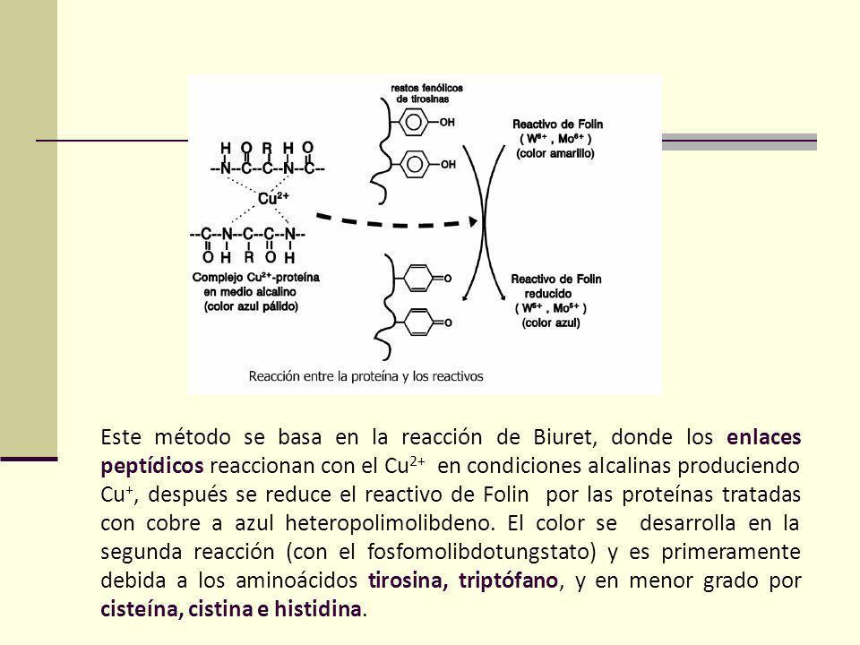 Este método se basa en la reacción de Biuret, donde los enlaces peptídicos reaccionan con el Cu 2+ en condiciones alcalinas produciendo Cu +, después se reduce el reactivo de Folin por las proteínas tratadas con cobre a azul heteropolimolibdeno.