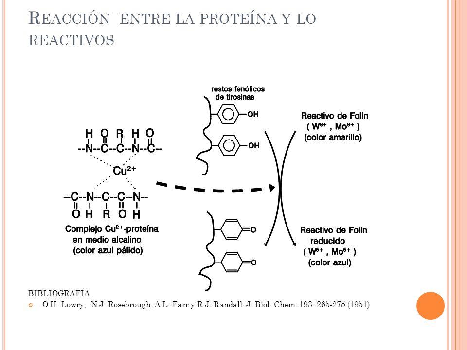 R EACCIÓN ENTRE LA PROTEÍNA Y LO REACTIVOS BIBLIOGRAFÍA O.H. Lowry, N.J. Rosebrough, A.L. Farr y R.J. Randall. J. Biol. Chem. 193: 265-275 (1951)