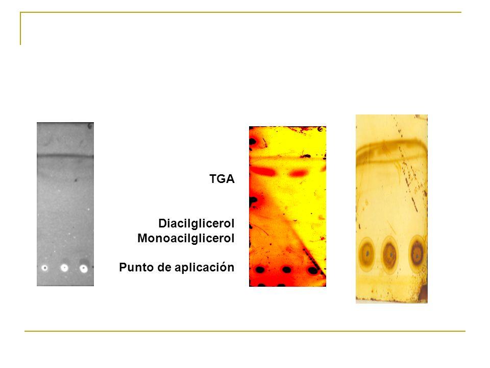 TGA Diacilglicerol Monoacilglicerol Punto de aplicación