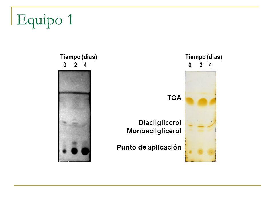 Equipo 1 TGA Diacilglicerol Monoacilglicerol Punto de aplicación Tiempo (días) 0 2 4 Tiempo (días) 0 2 4