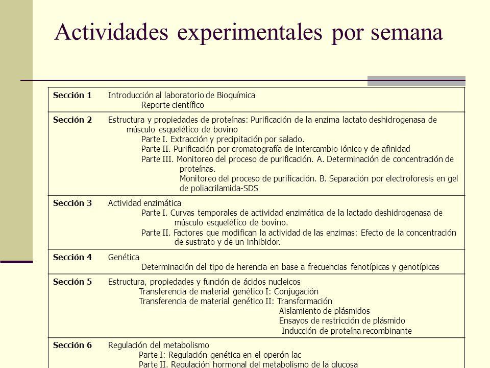 Actividades experimentales por semana Sección 1Introducción al laboratorio de Bioquímica Reporte científico Sección 2Estructura y propiedades de prote