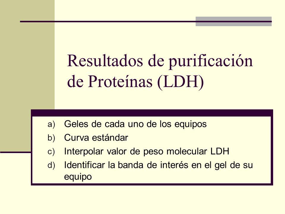 Resultados de purificación de Proteínas (LDH) a) Geles de cada uno de los equipos b) Curva estándar c) Interpolar valor de peso molecular LDH d) Ident