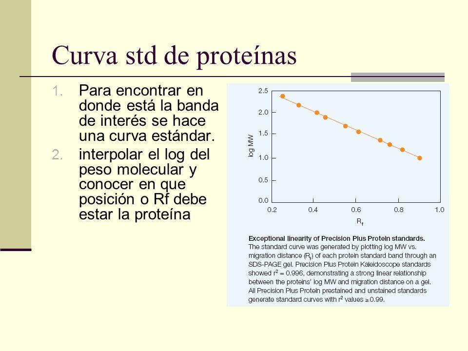 Curva std de proteínas 1. Para encontrar en donde está la banda de interés se hace una curva estándar. 2. interpolar el log del peso molecular y conoc