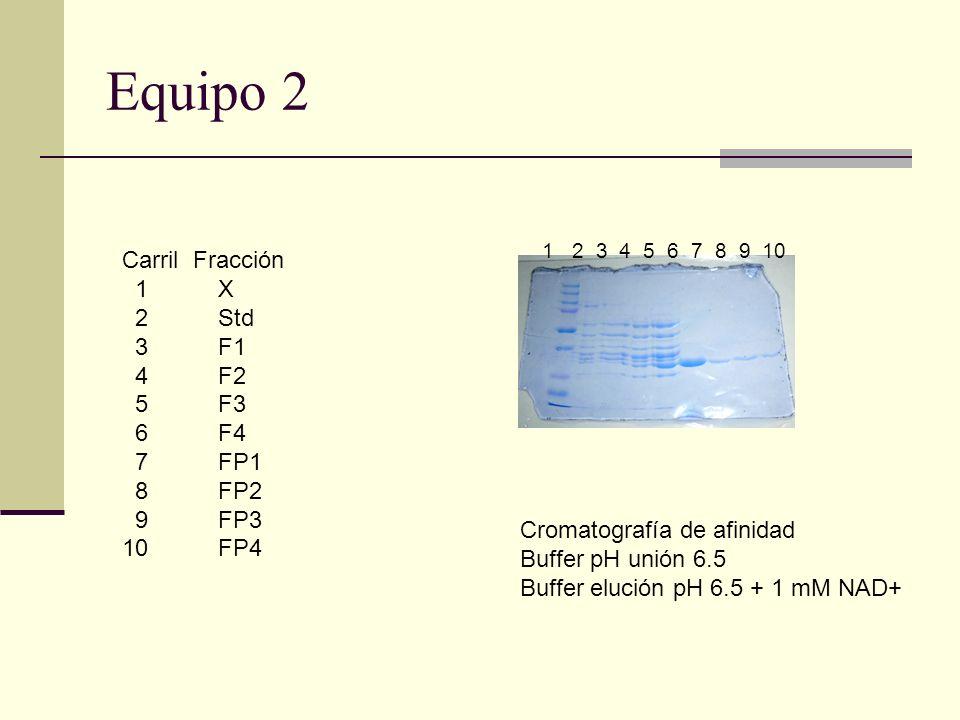 Equipo 2 Carril Fracción 1 X 2 Std 3F1 4F2 5F3 6F4 7FP1 8FP2 9FP3 10 FP4 1 2 3 4 5 6 7 8 9 10 Cromatografía de afinidad Buffer pH unión 6.5 Buffer elu