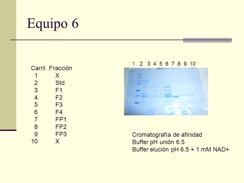 Equipo 6 1 2 3 4 5 6 7 8 9 10 Carril Fracción 1 X 2 Std 3F1 4F2 5F3 6F4 7FP1 8FP2 9FP3 10 X Cromatografía de afinidad Buffer pH unión 6.5 Buffer eluci