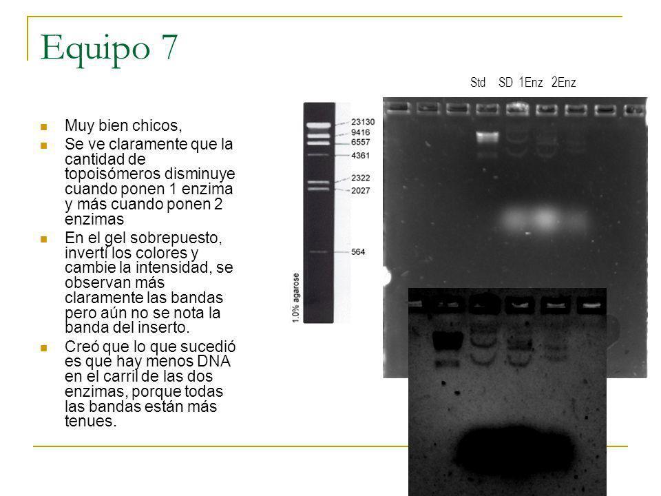 Equipo 7 Muy bien chicos, Se ve claramente que la cantidad de topoisómeros disminuye cuando ponen 1 enzima y más cuando ponen 2 enzimas En el gel sobr