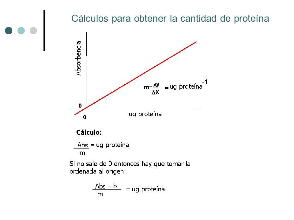 Cálculos para obtener la cantidad de proteína