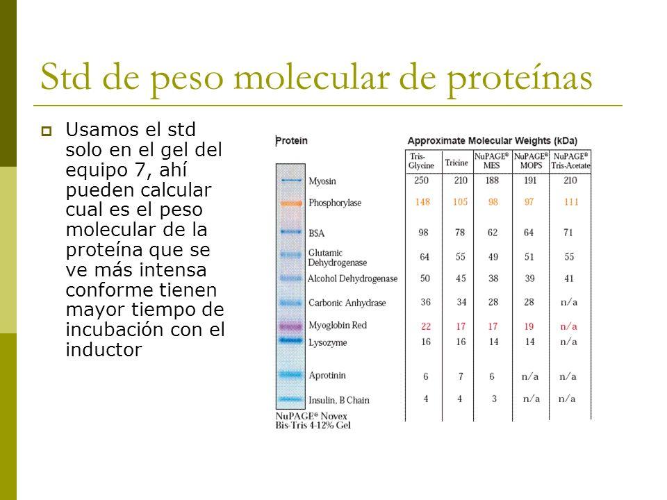 Std de peso molecular de proteínas Usamos el std solo en el gel del equipo 7, ahí pueden calcular cual es el peso molecular de la proteína que se ve m