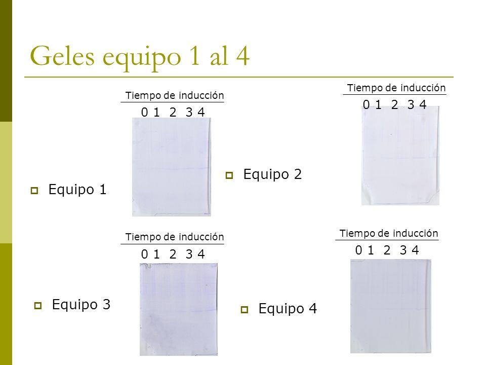 Geles equipo 1 al 4 Equipo 1 Equipo 2 Equipo 3 Equipo 4 0 1 2 3 4 Tiempo de inducción 0 1 2 3 4 Tiempo de inducción 0 1 2 3 4 Tiempo de inducción 0 1