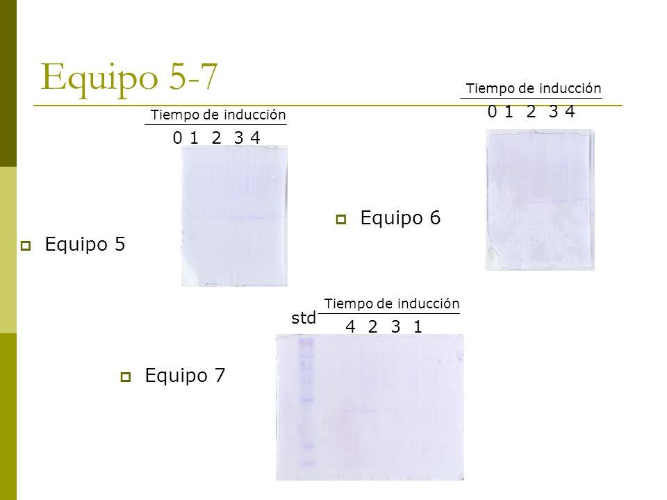 Equipo 5-7 Equipo 5 0 1 2 3 4 Tiempo de inducción Equipo 6 0 1 2 3 4 Tiempo de inducción 4 2 3 1 Tiempo de inducción Equipo 7 std