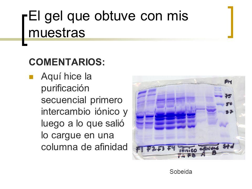 Comentarios y peticiones Con su gel obtengan los Rfs del estándar y hagan la gráfica como la de la diapositiva anterior Calculen en donde estaría su proteína Señálenla en su gel.