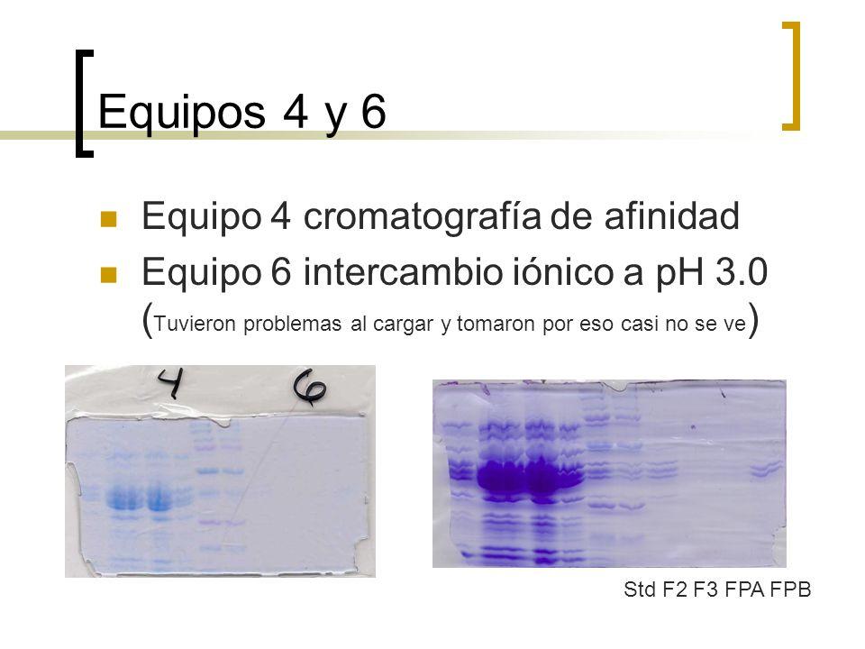 Equipos 4 y 6 Equipo 4 cromatografía de afinidad Equipo 6 intercambio iónico a pH 3.0 ( Tuvieron problemas al cargar y tomaron por eso casi no se ve )