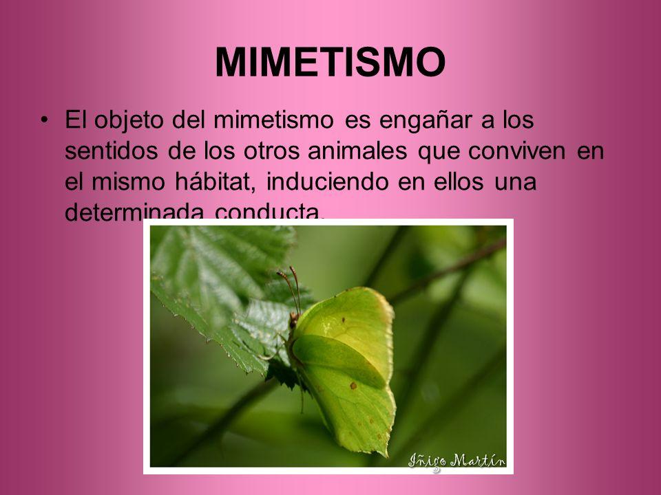MIMETISMO El objeto del mimetismo es engañar a los sentidos de los otros animales que conviven en el mismo hábitat, induciendo en ellos una determinad