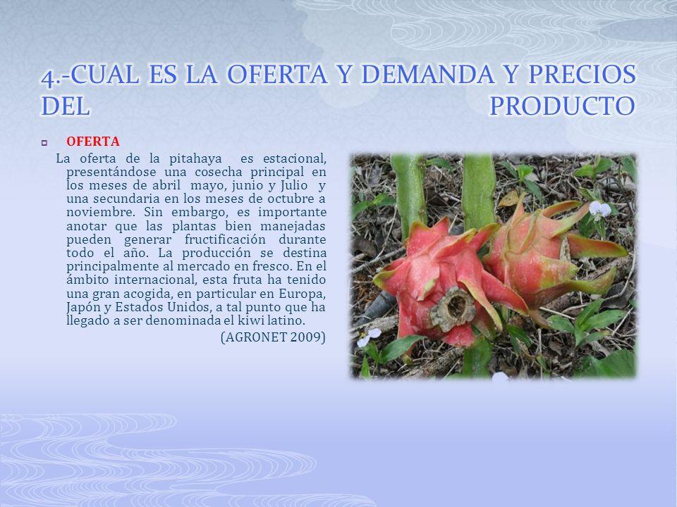 OFERTA La oferta de la pitahaya es estacional, presentándose una cosecha principal en los meses de abril mayo, junio y Julio y una secundaria en los m