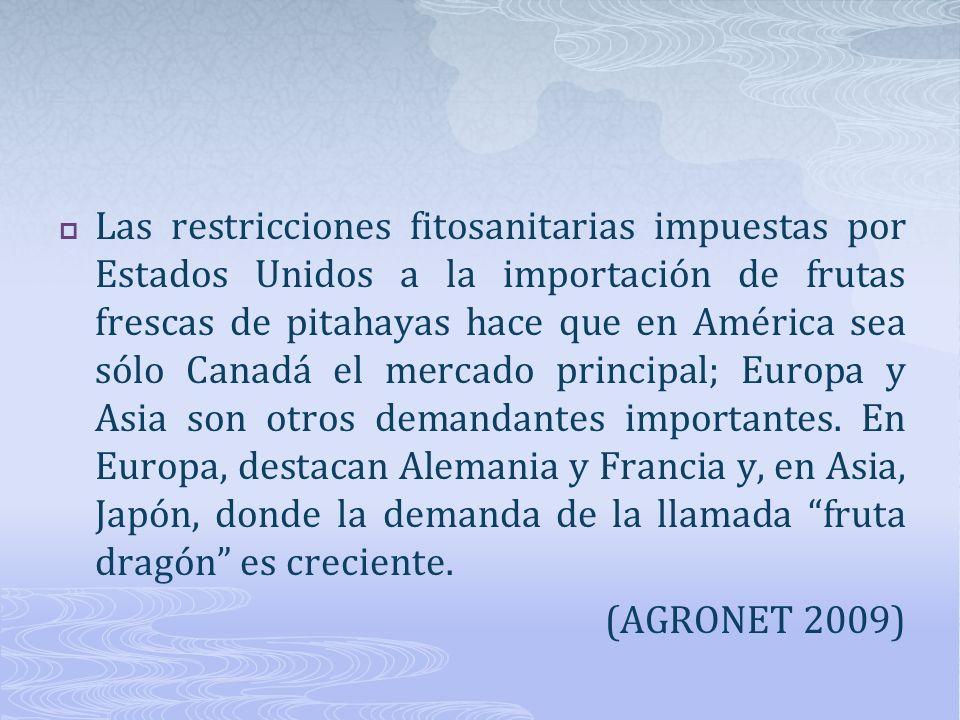 Las restricciones fitosanitarias impuestas por Estados Unidos a la importación de frutas frescas de pitahayas hace que en América sea sólo Canadá el m