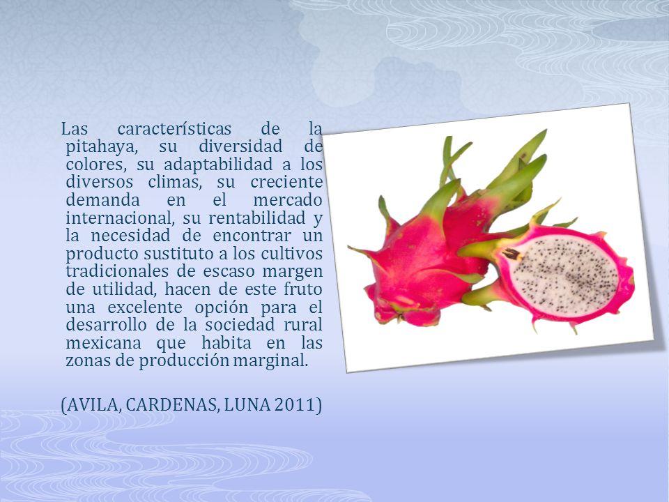 Las características de la pitahaya, su diversidad de colores, su adaptabilidad a los diversos climas, su creciente demanda en el mercado internacional