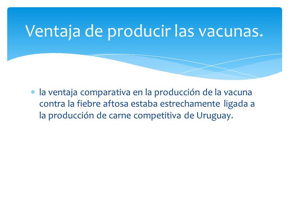 la ventaja comparativa en la producción de la vacuna contra la fiebre aftosa estaba estrechamente ligada a la producción de carne competitiva de Uruguay.