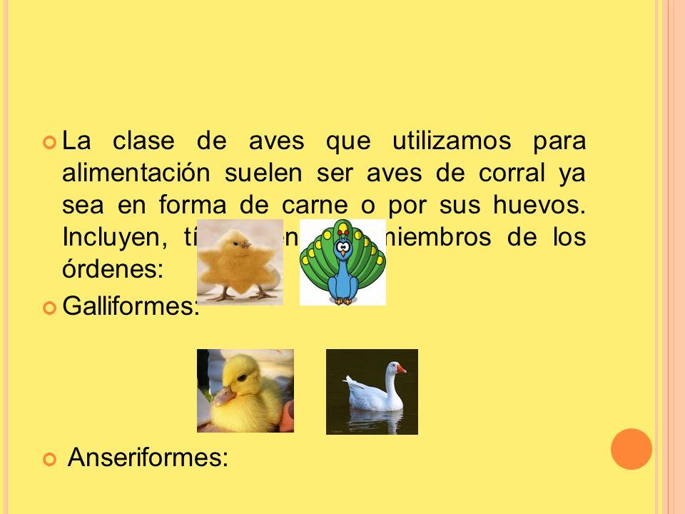 La clase de aves que utilizamos para alimentación suelen ser aves de corral ya sea en forma de carne o por sus huevos. Incluyen, típicamente, a miembr