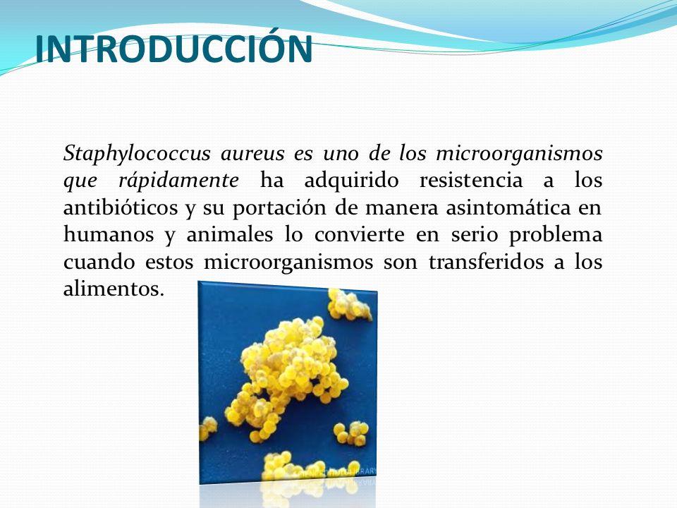 Staphylococcus aureus es uno de los microorganismos que rápidamente ha adquirido resistencia a los antibióticos y su portación de manera asintomática