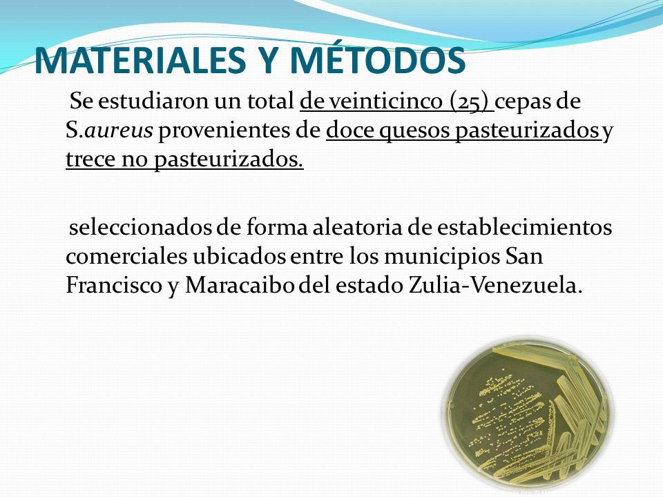 MATERIALES Y MÉTODOS Se estudiaron un total de veinticinco (25) cepas de S.aureus provenientes de doce quesos pasteurizados y trece no pasteurizados.