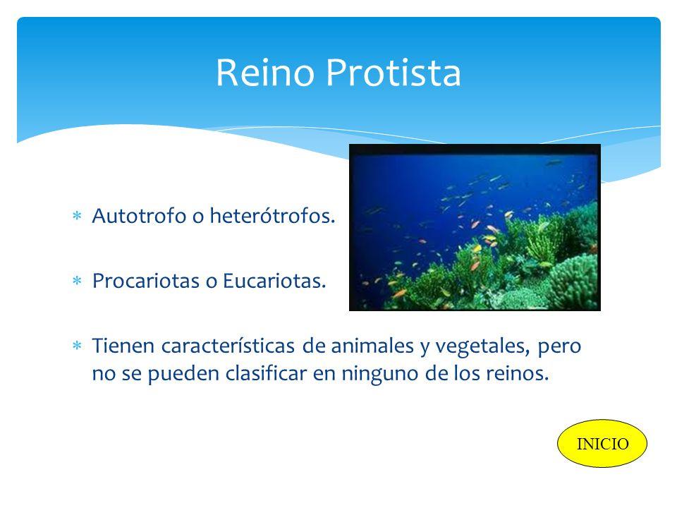 Reino Protista Autotrofo o heterótrofos. Procariotas o Eucariotas. Tienen características de animales y vegetales, pero no se pueden clasificar en nin