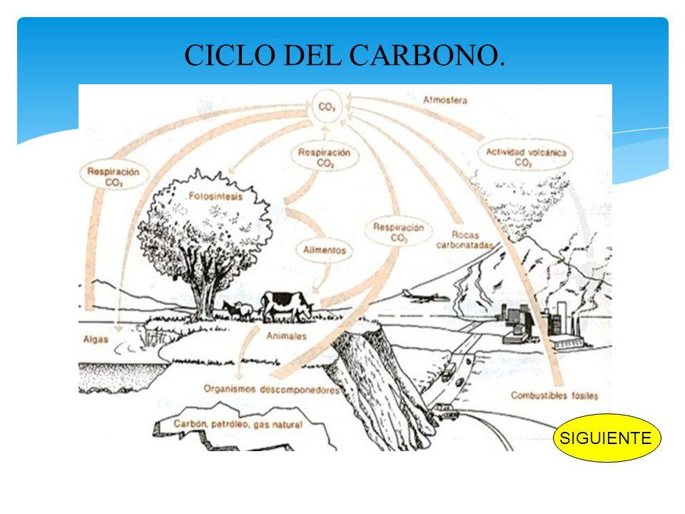 CICLO DEL CARBONO. SIGUIENTE