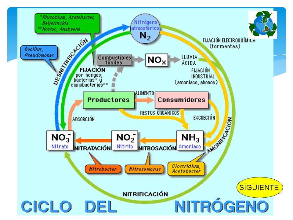 Protistos inferiores Bacterias Cianobacterias INICIO