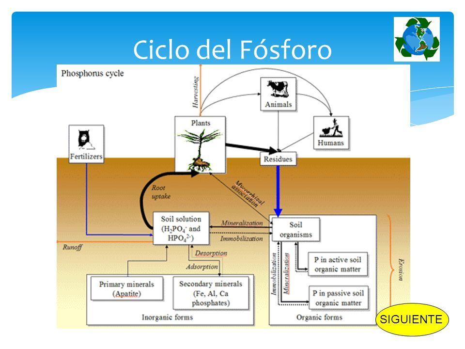 Célula Unidad fundamental de los seres vivos Unicelulares y Pluricelulares INICIO