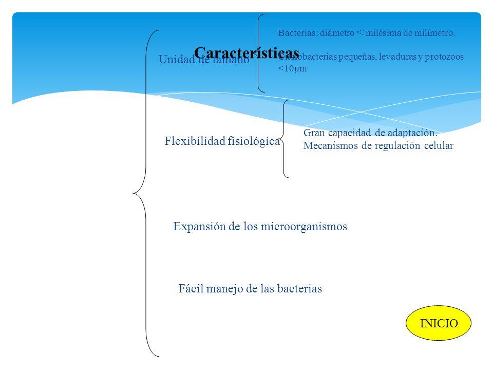 Características Unidad de tamaño Flexibilidad fisiológica Expansión de los microorganismos Fácil manejo de las bacterias Bacterias: diámetro < milésim