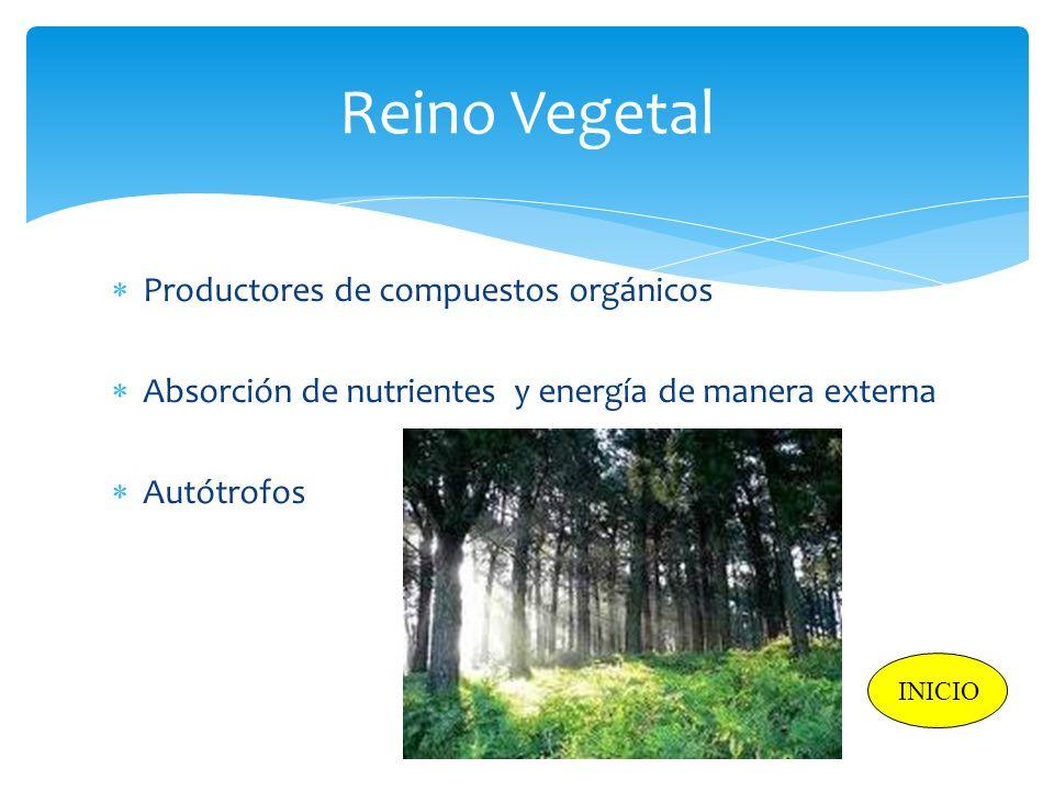 Reino Vegetal Productores de compuestos orgánicos Absorción de nutrientes y energía de manera externa Autótrofos INICIO