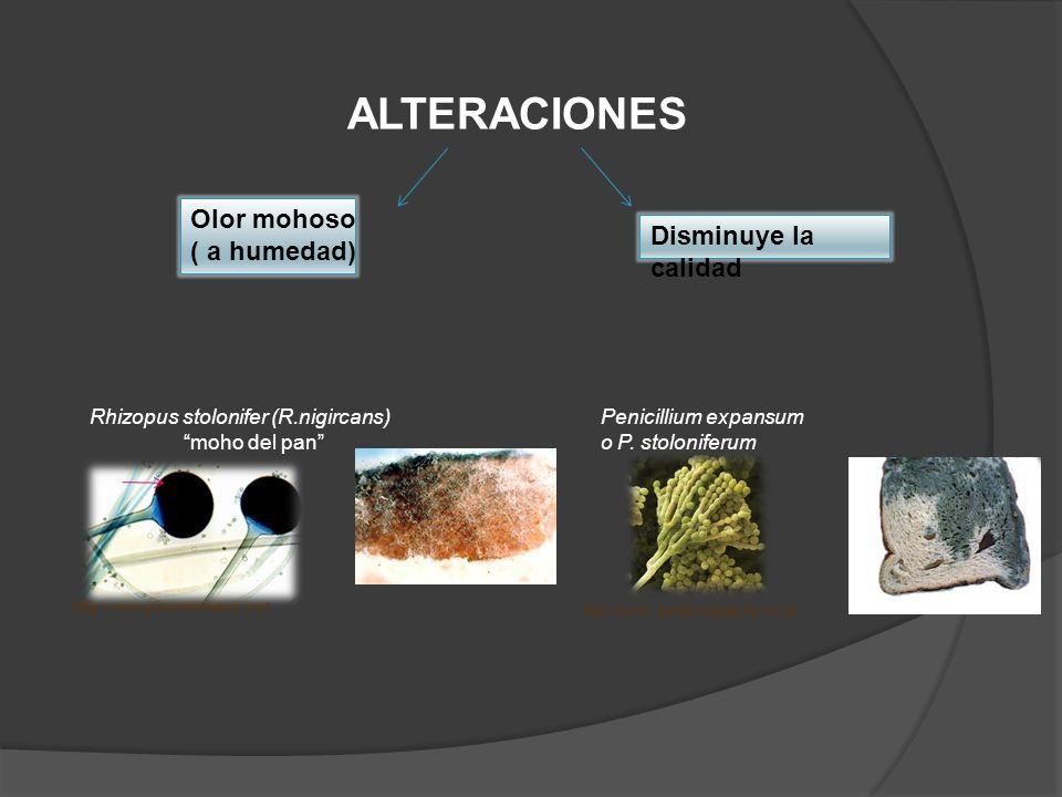 ALTERACIONES Olor mohoso ( a humedad) Disminuye la calidad http://www.polychemalloy.com Rhizopus stolonifer (R.nigircans) moho del pan http://www. psm