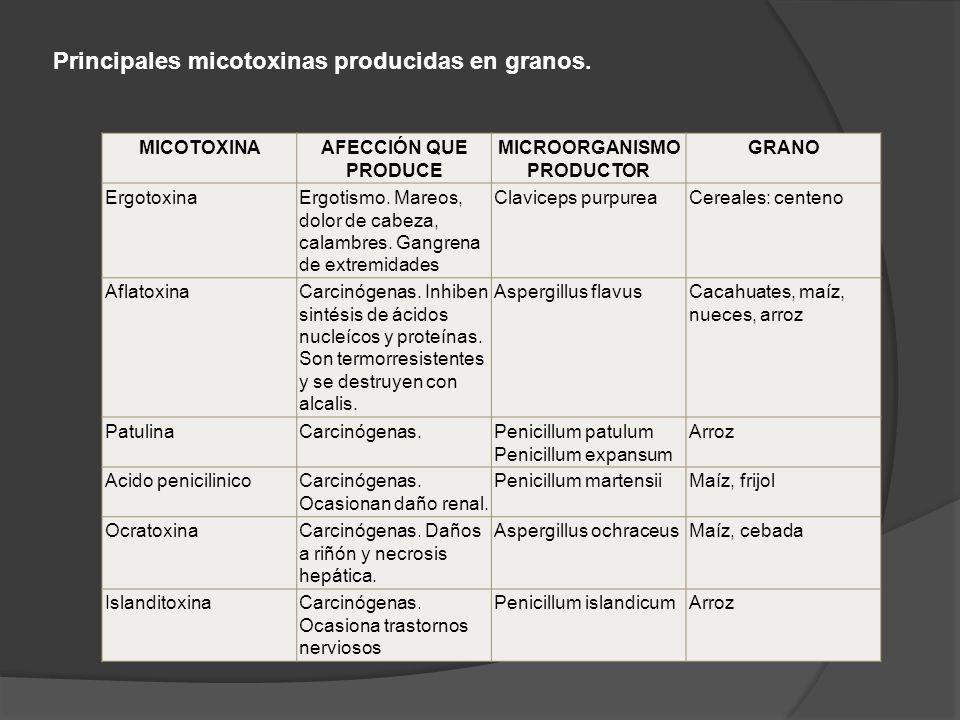 Principales micotoxinas producidas en granos. MICOTOXINAAFECCIÓN QUE PRODUCE MICROORGANISMO PRODUCTOR GRANO ErgotoxinaErgotismo. Mareos, dolor de cabe