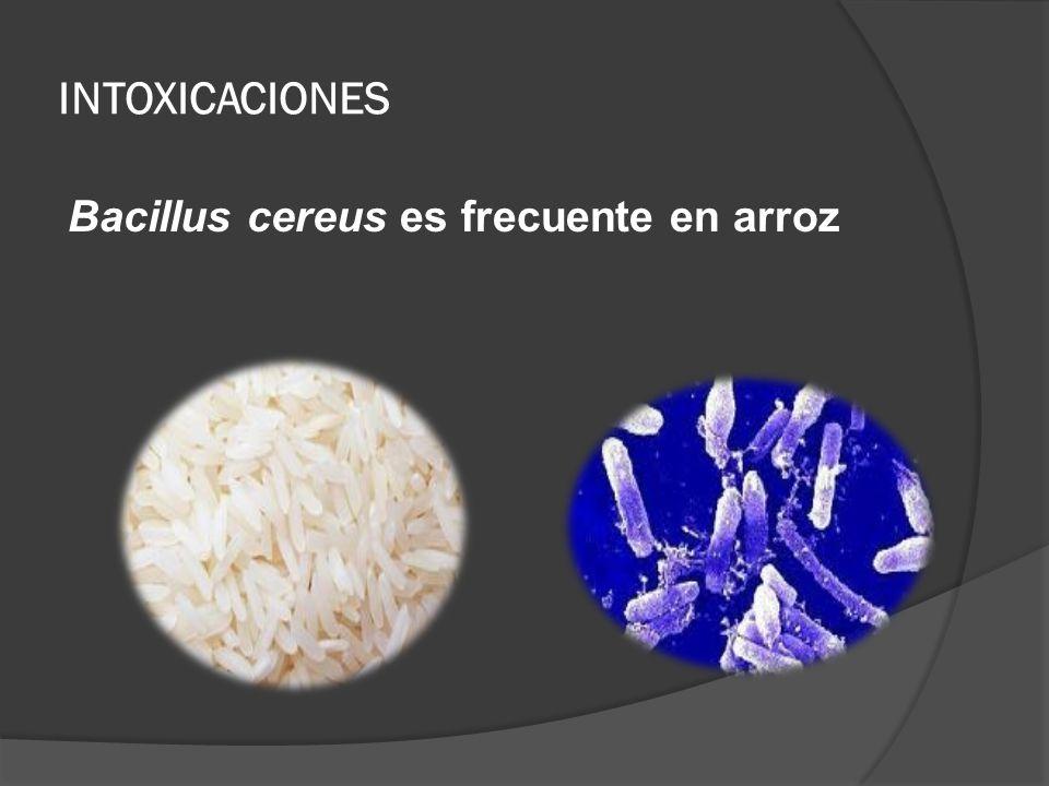INTOXICACIONES Bacillus cereus es frecuente en arroz
