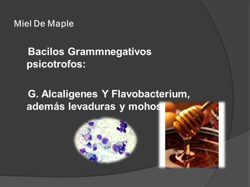 Miel De Maple Bacilos Grammnegativos psicotrofos: G. Alcaligenes Y Flavobacterium, además levaduras y mohos
