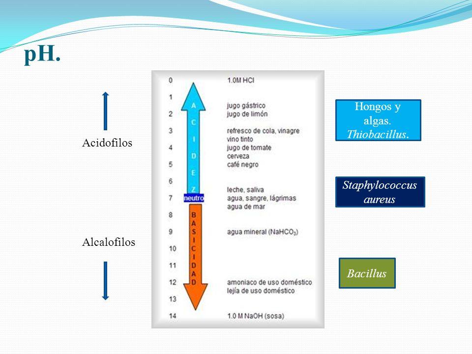 pH. Acidofilos Alcalofilos Hongos y algas. Thiobacillus. Staphylococcus aureus Bacillus