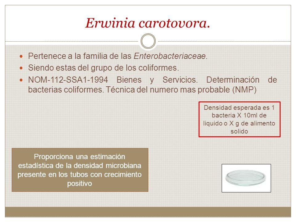Erwinia carotovora. Pertenece a la familia de las Enterobacteriaceae. Siendo estas del grupo de los coliformes. NOM-112-SSA1-1994 Bienes y Servicios.