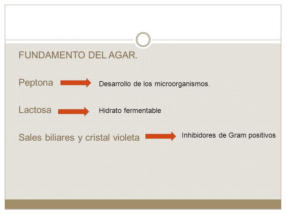 FUNDAMENTO DEL AGAR. Peptona Lactosa Sales biliares y cristal violeta Desarrollo de los microorganismos. Hidrato fermentable Inhibidores de Gram posit
