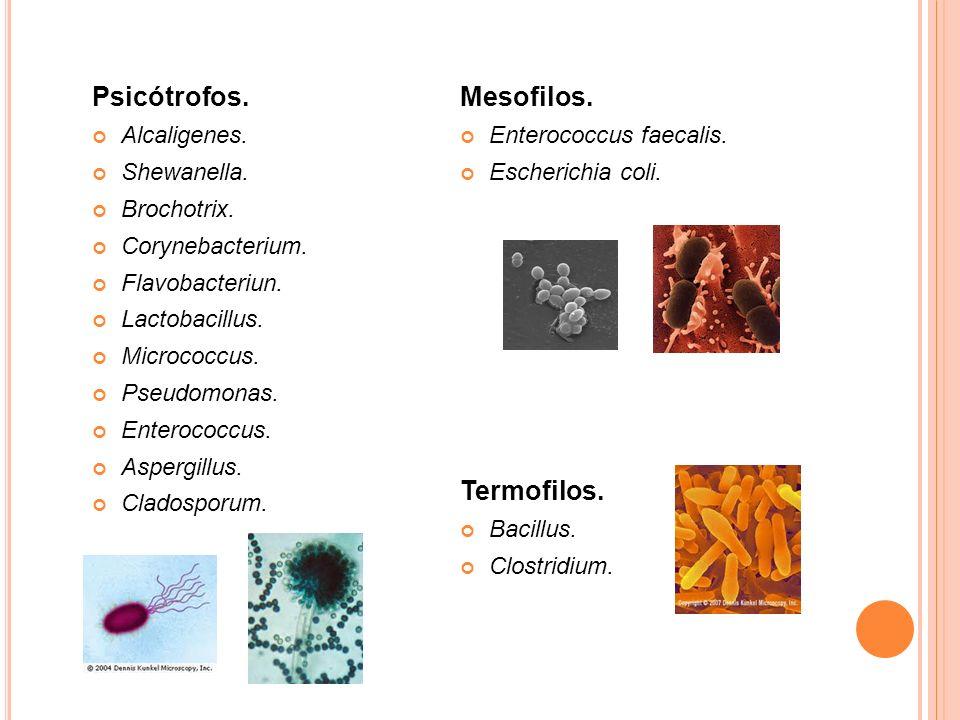 Psicótrofos. Alcaligenes. Shewanella. Brochotrix. Corynebacterium. Flavobacteriun. Lactobacillus. Micrococcus. Pseudomonas. Enterococcus. Aspergillus.