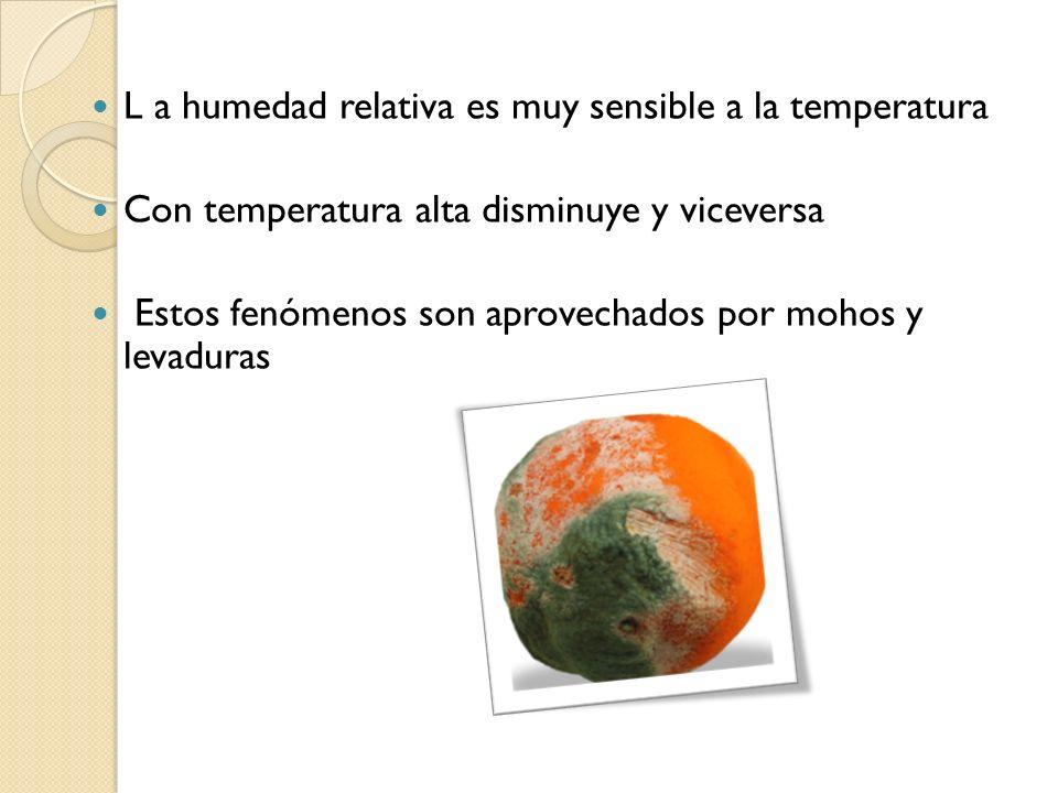 L a humedad relativa es muy sensible a la temperatura Con temperatura alta disminuye y viceversa Estos fenómenos son aprovechados por mohos y levadura