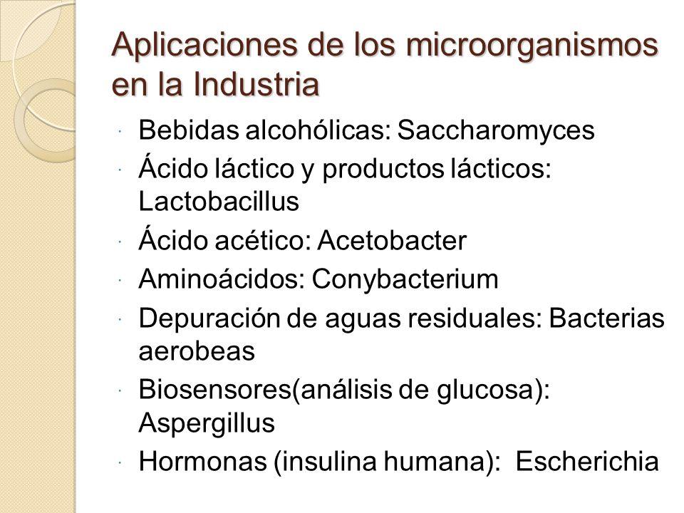 Aplicaciones de los microorganismos en la Industria Bebidas alcohólicas: Saccharomyces Ácido láctico y productos lácticos: Lactobacillus Ácido acético