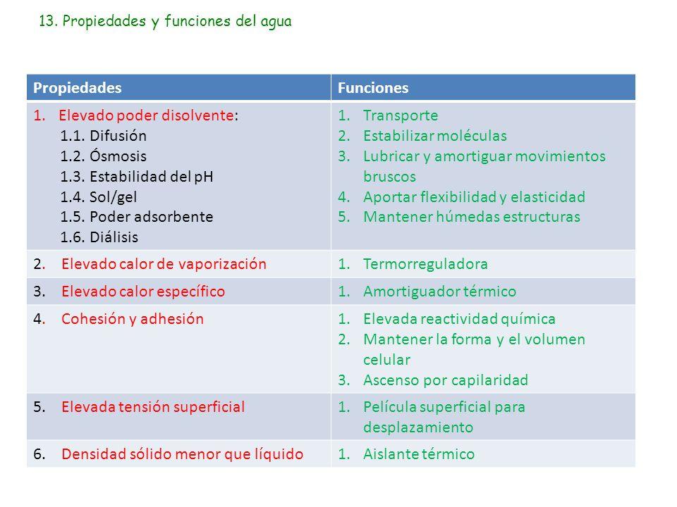 13. Propiedades y funciones del agua PropiedadesFunciones 1.Elevado poder disolvente: 1.1. Difusión 1.2. Ósmosis 1.3. Estabilidad del pH 1.4. Sol/gel